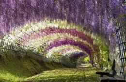 neverovatni_tuneli