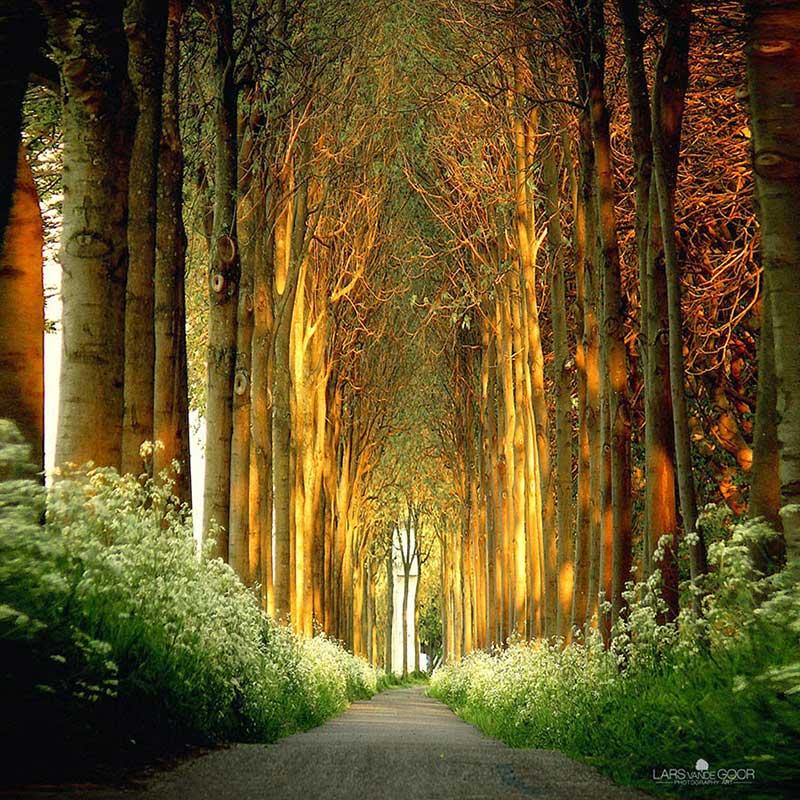 tunel_od_drveca_u_holandiji