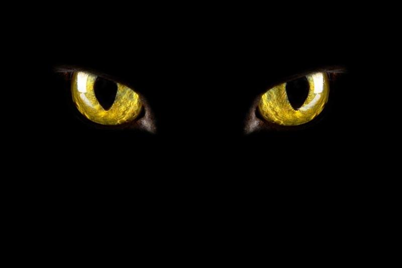 Strah_od_mačaka