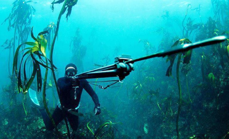 Tajger_Vuds_podvodno_ronjenje
