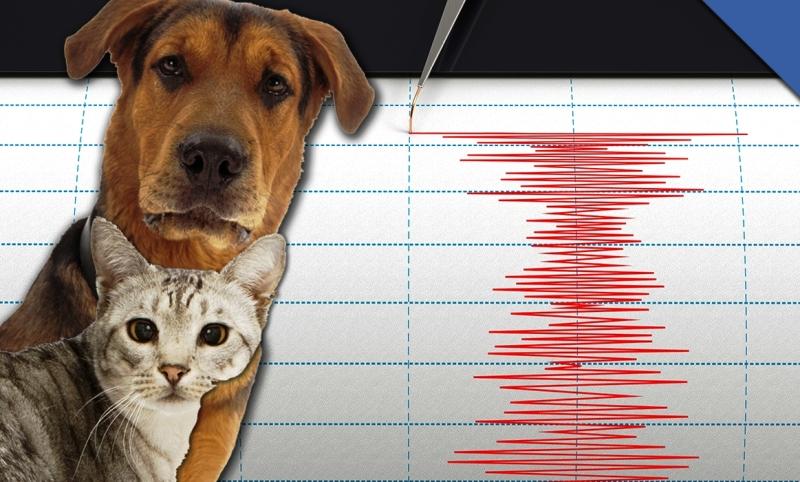 zivotinje_osecaju_zemljotres