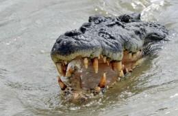 krokodili_naslovna