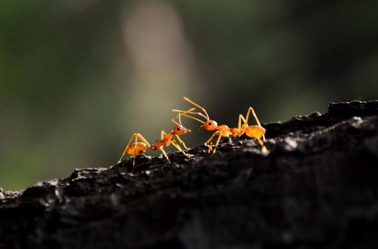 mravi_naslovna