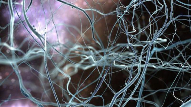 nervni_sistem