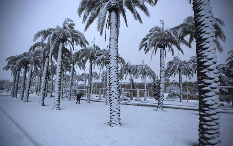 palme_pod_snegom