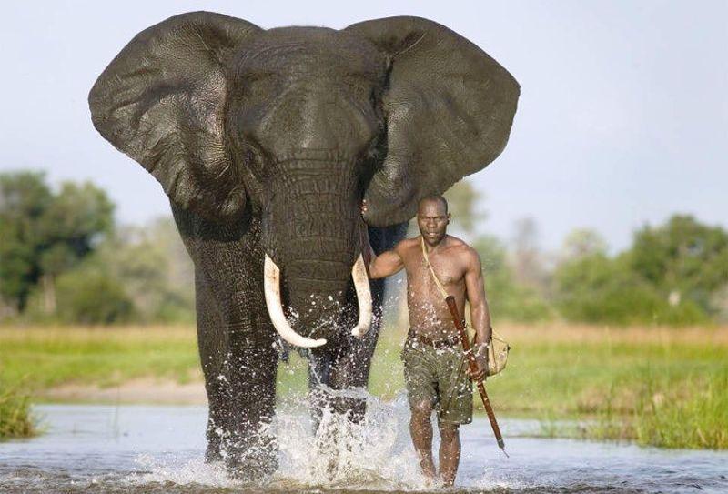 veliki_slon