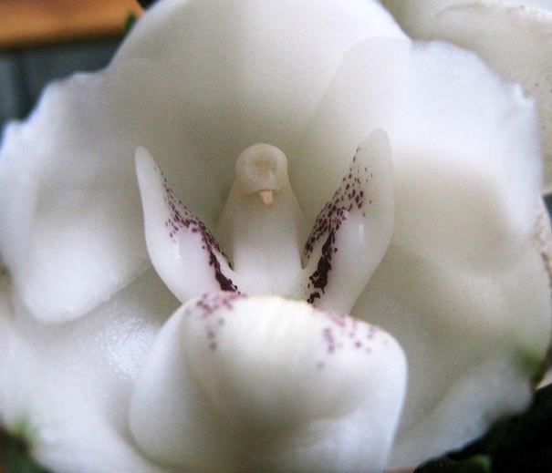 flowers-look-like-animals-people-monkeys-orchids-pareidolia-43