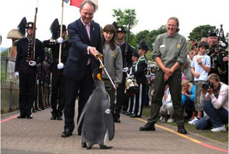 pingvin_vitez