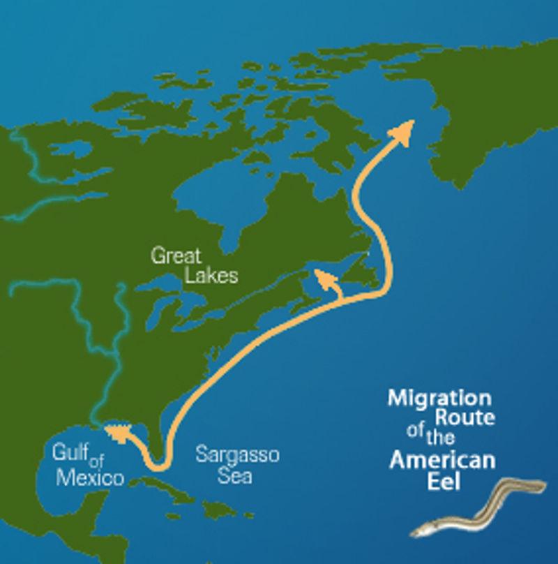migracije