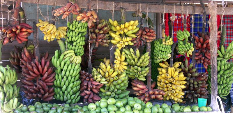razlicite_vrste_banana