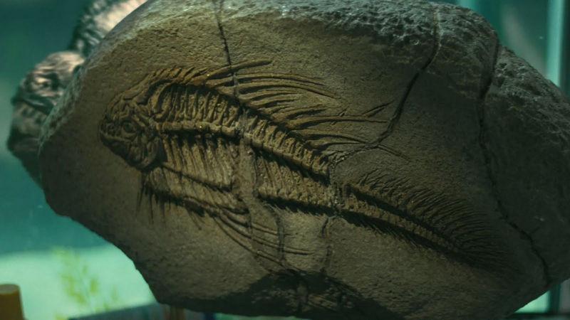 Miocen