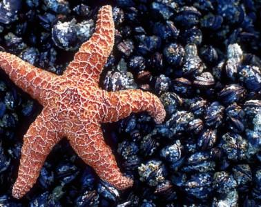 morska_zvezda_naslovna