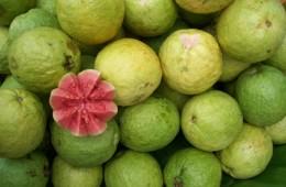guava_naslovna