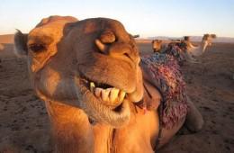 kamile_naslovna