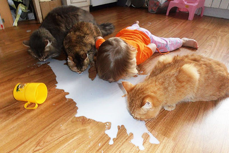 mačka_kućni_ljubimac