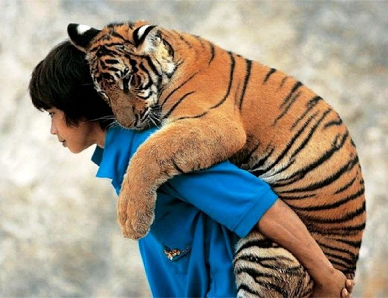 tigrić