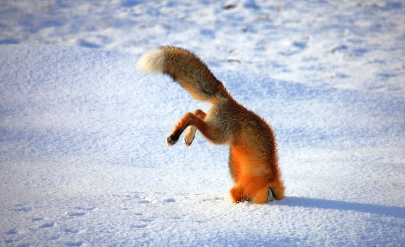 buve_prezive_zimu