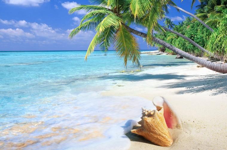 tropska_palma