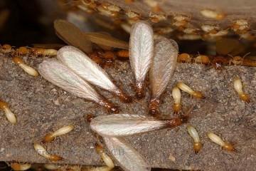 termiti_naslovna