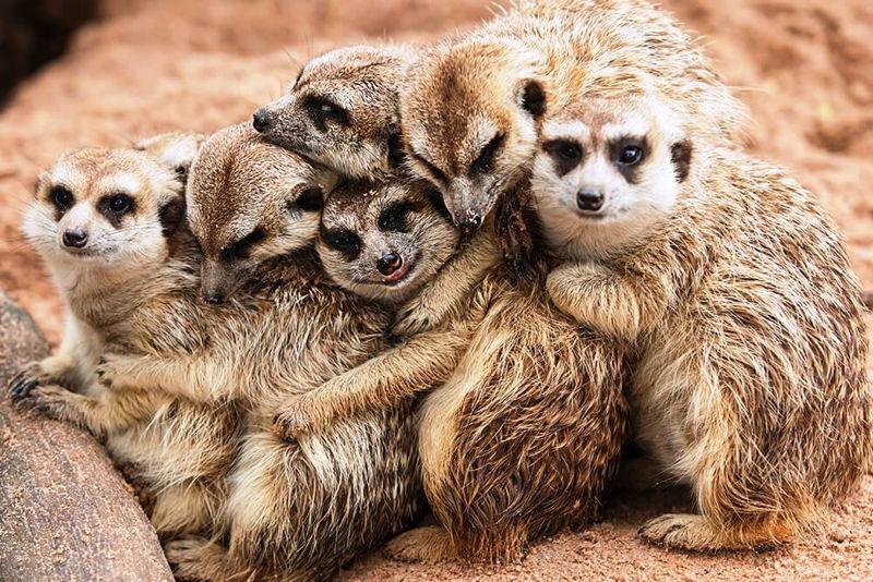 Foto: animals.sandiegozoo.org