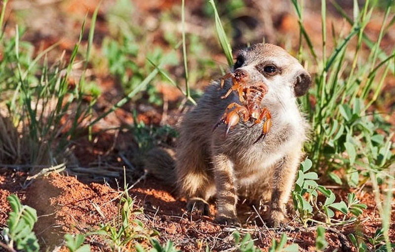 Foto: safarious.com