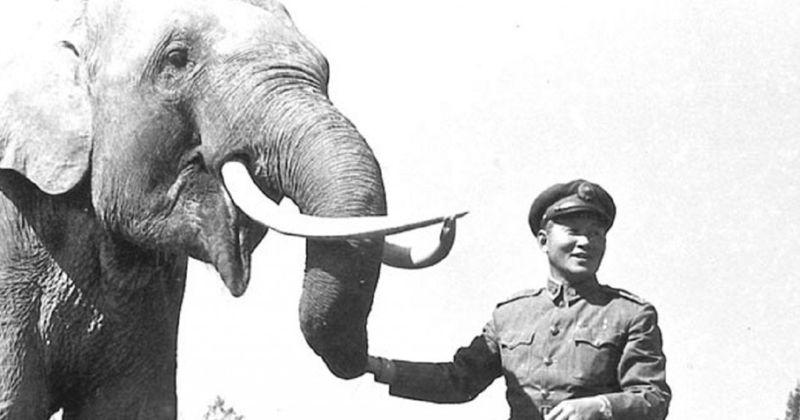 Zanimljivosti iz životinjskog carstva - Page 10 Slon