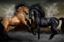 konji_naslovna