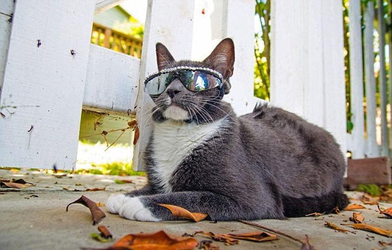 Foto: kedisahiplendirme.com
