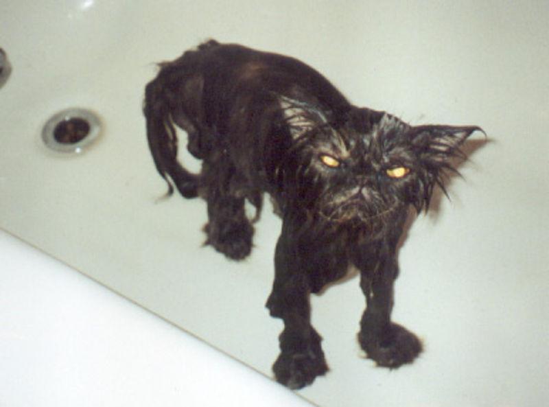 Foto: kittybloger.wordpress.com