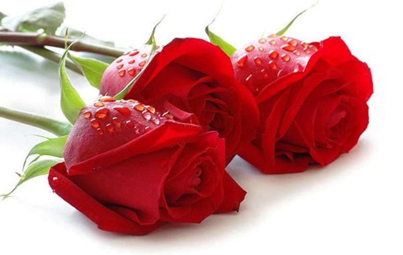Foto: floweraura.com