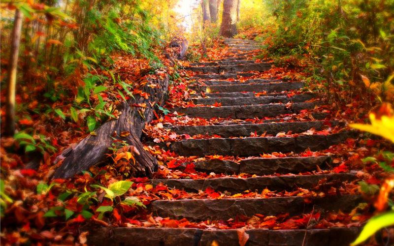Foto: wallpapercave.com