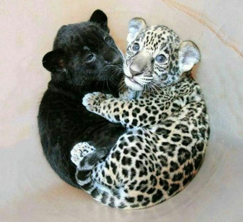 Foto: critterbabies.com