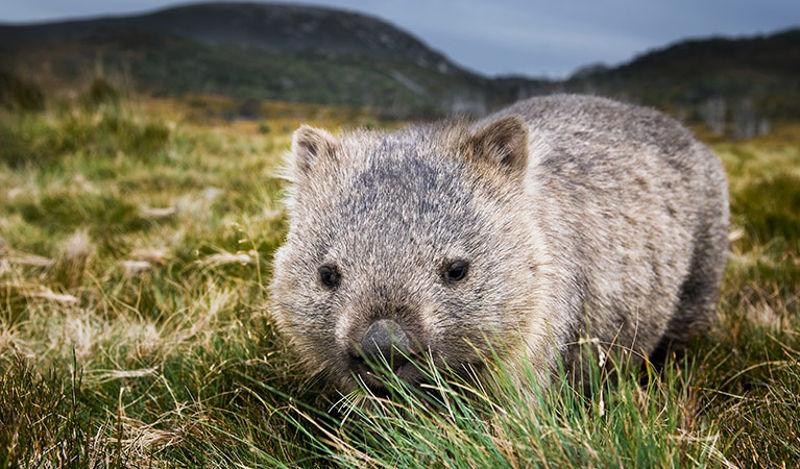 Foto: nationalparks.nsw.gov.au