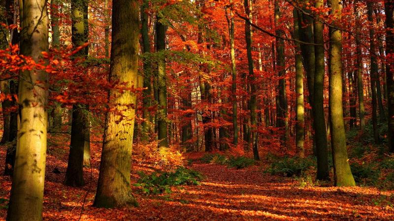 Foto: thinglink.com