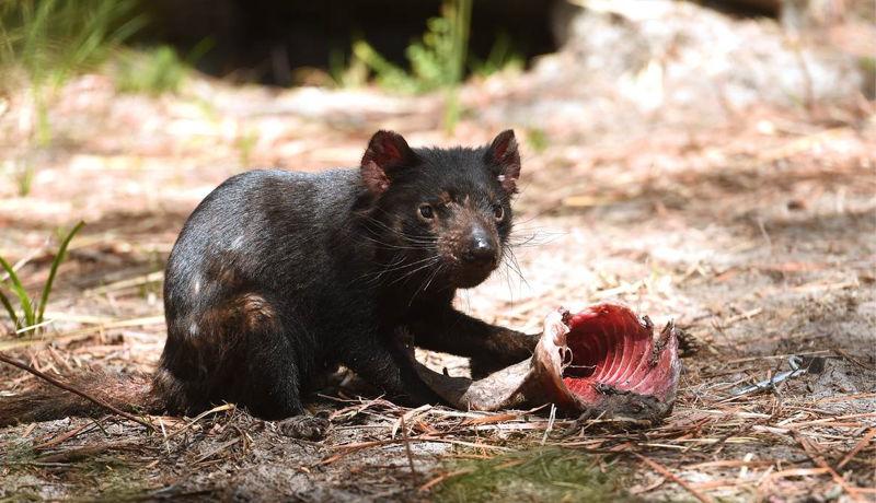 Foto: examiner.com.au