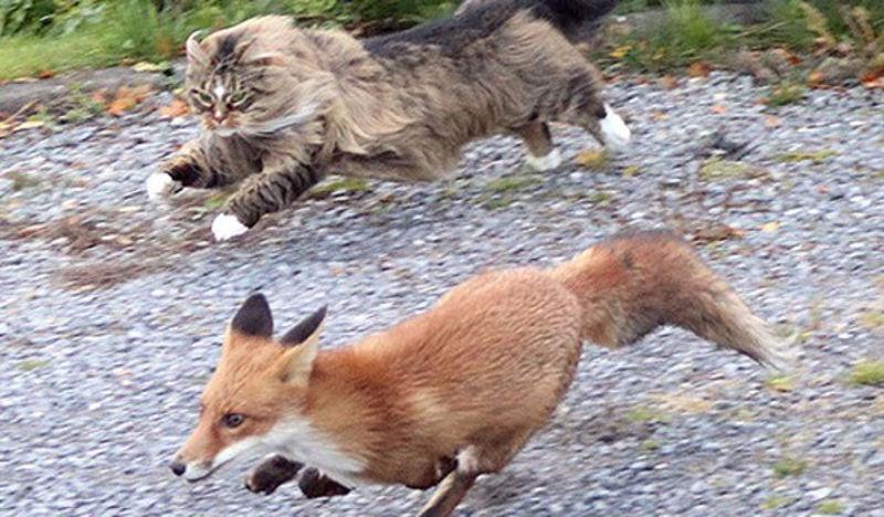 Foto: catbehaviourist.com