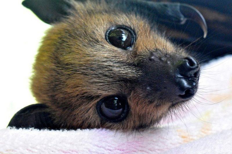 Foto: wowamazing.com