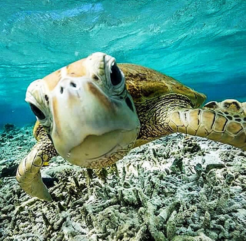 Foto: tallshipadventures.com.au