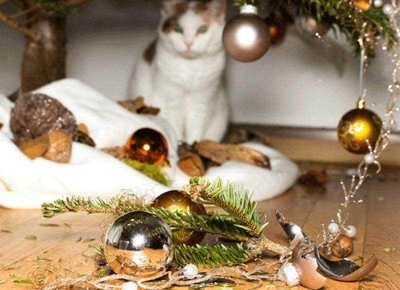 Foto: petmd.com