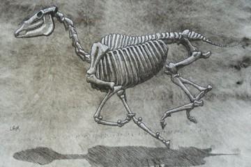 skeleti_zivotinja_naslovna