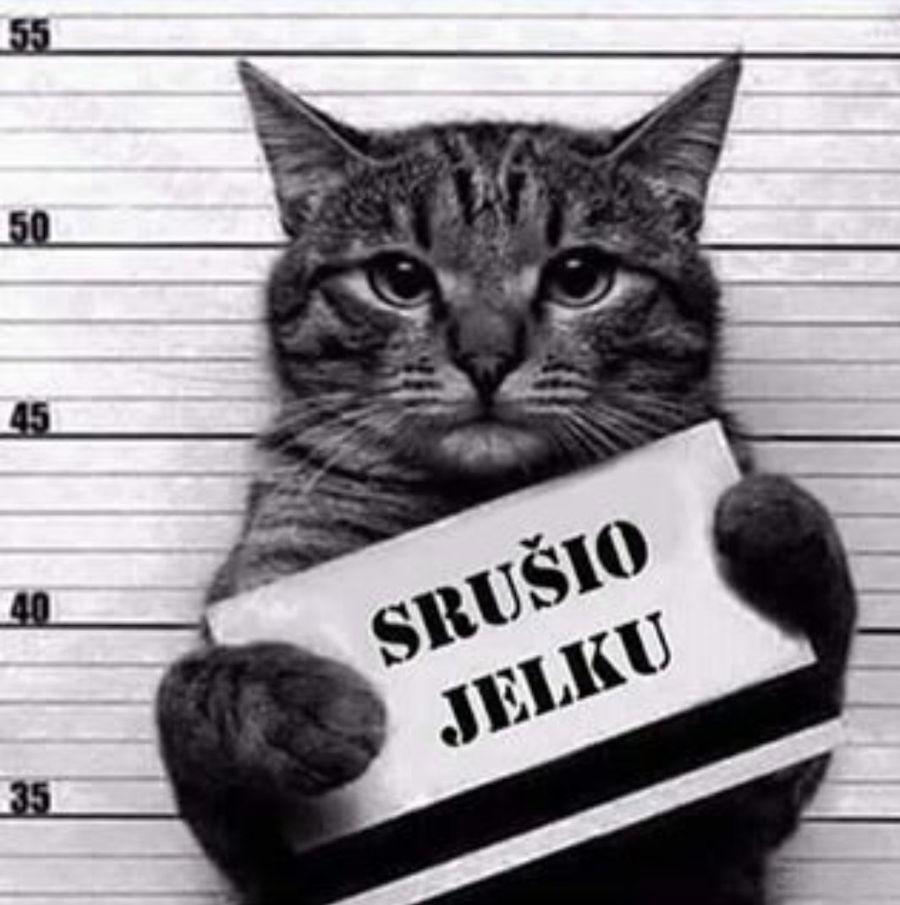 srusio_jelku_naslovna
