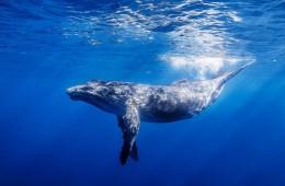 kitovi_naslovna