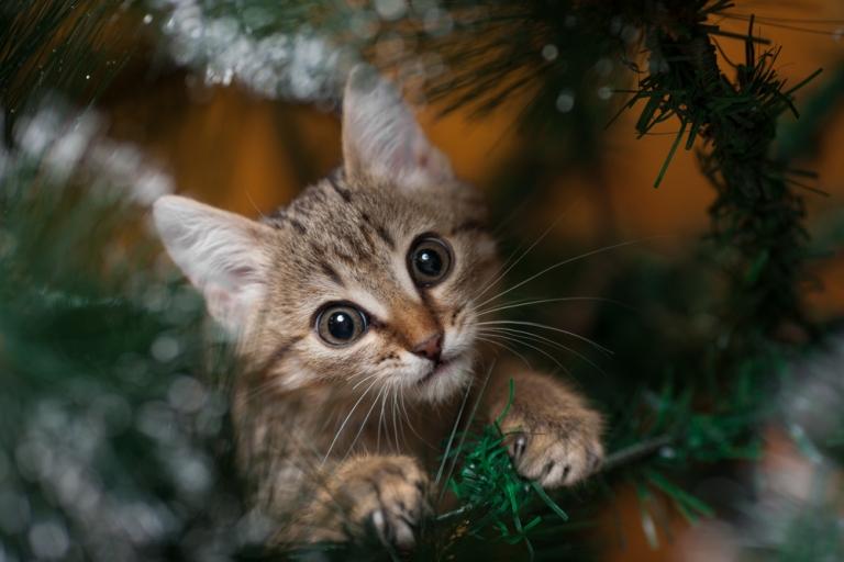 mačka_božićno drvo