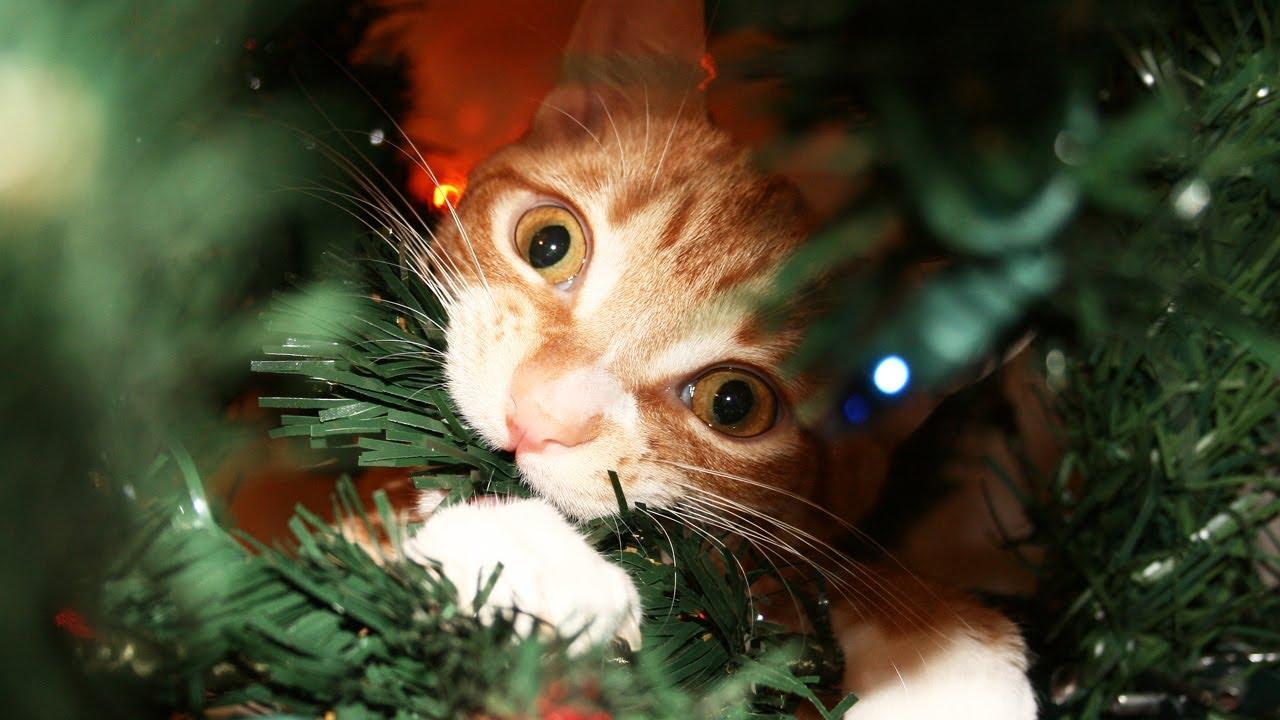 mačke_smešne