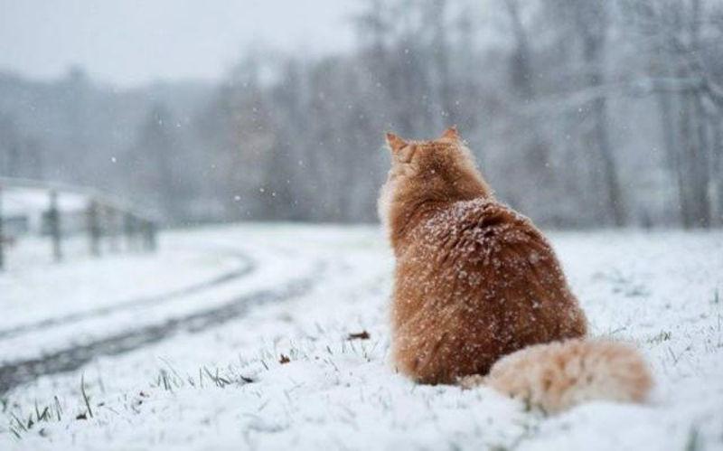 Foto: snowcats.tumblr.com/
