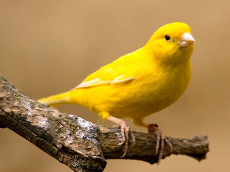 Foto: singing-wings-aviary.com