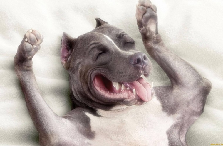 pas se smeje