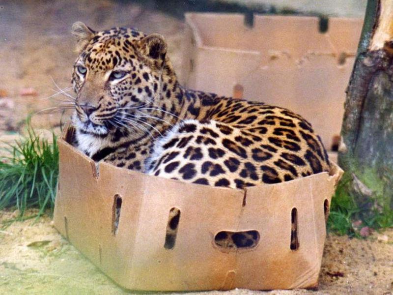 Foto: cat-tube.ru
