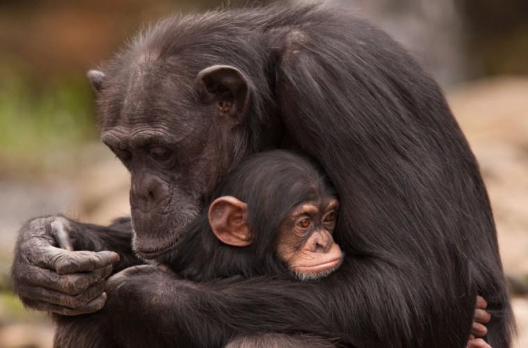 majka_majmun_naslovna