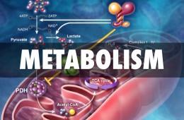 metabolizam_naslovna